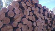 Требуется перевозка леса кругляка.ровные бревна