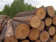 Требуется перевозка леса кругляка (ровные бревна)