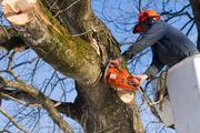 Спил деревьев и кустов в Томске